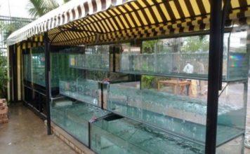 3 Tiêu chí chọn bể cá hải sản cho nhà hàng đẹp bạn nên biết
